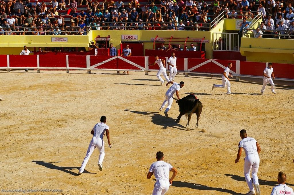 Corsa Camarghese arena di Saintes Maries de la Mer toro e rasatori