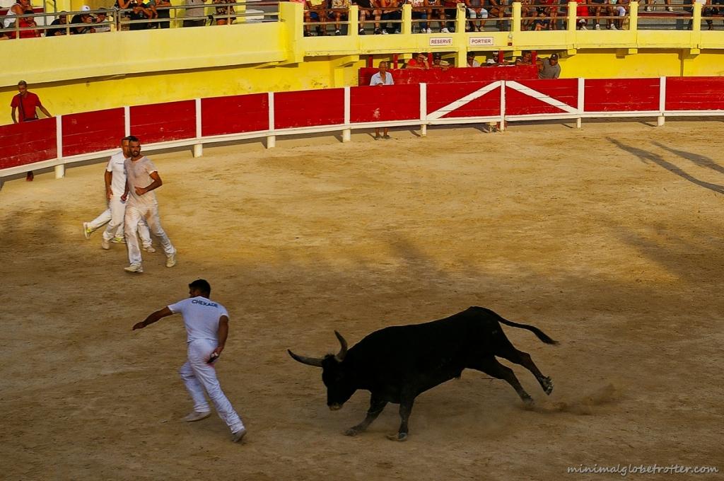 Corsa Camarghese arena di Saintes Maries de la Mer toro e raseteur